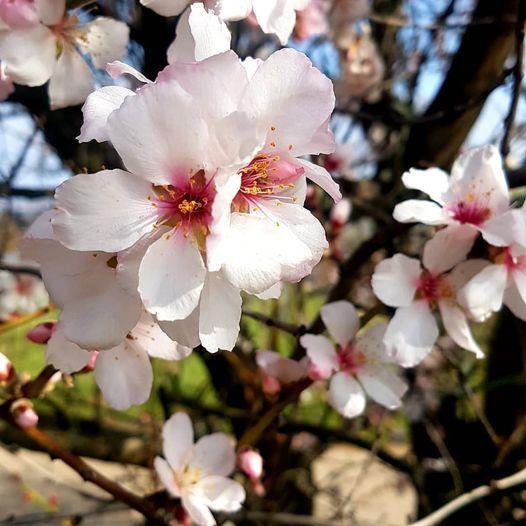 Ich wünsche Frohe Ostern und einen wunderbaren, gesunden Frühling!